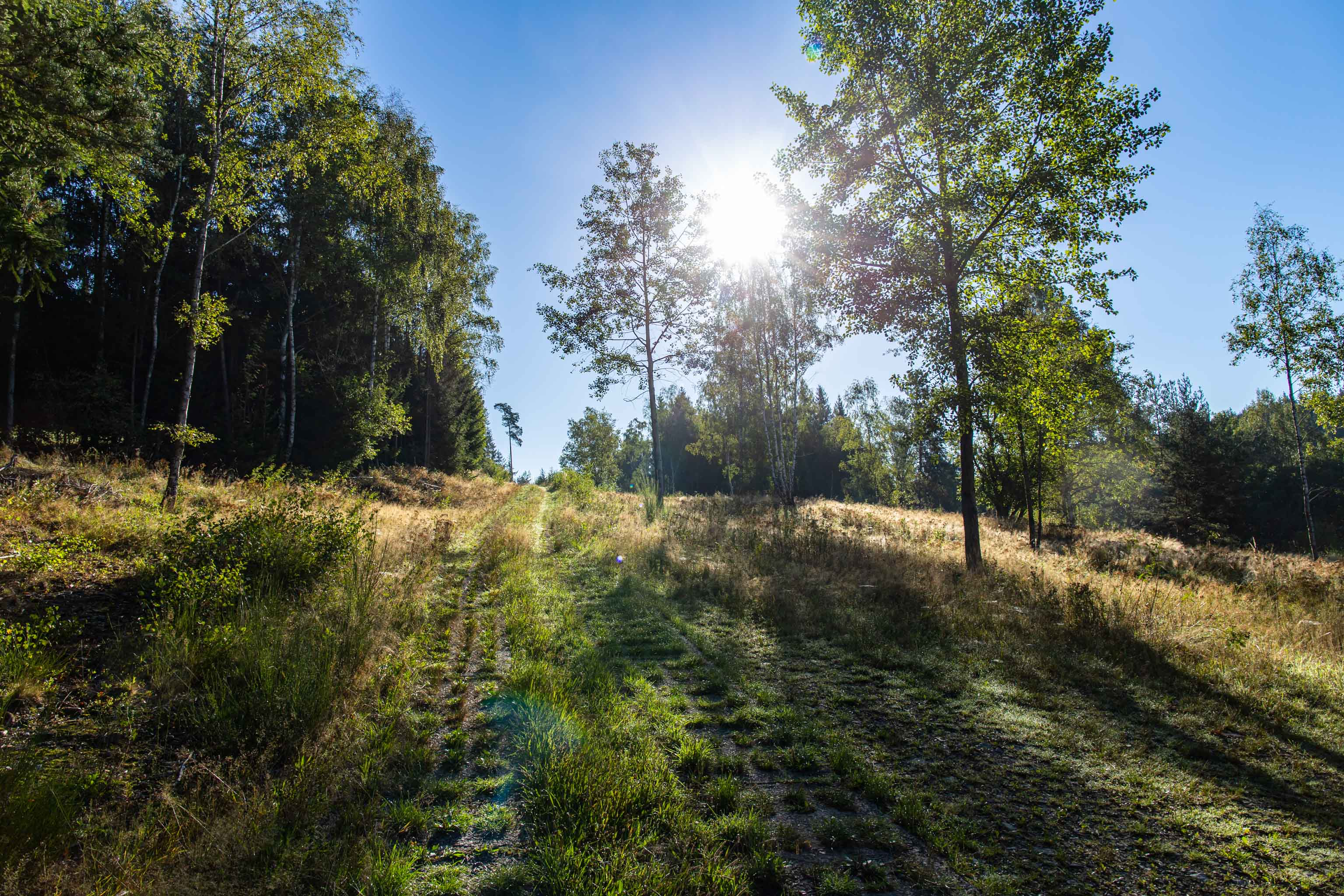 Green Belt army patrol road Kolonnenweg - long distance hiking - hiking trails Germany - hiking in Germany - top trails in Germany