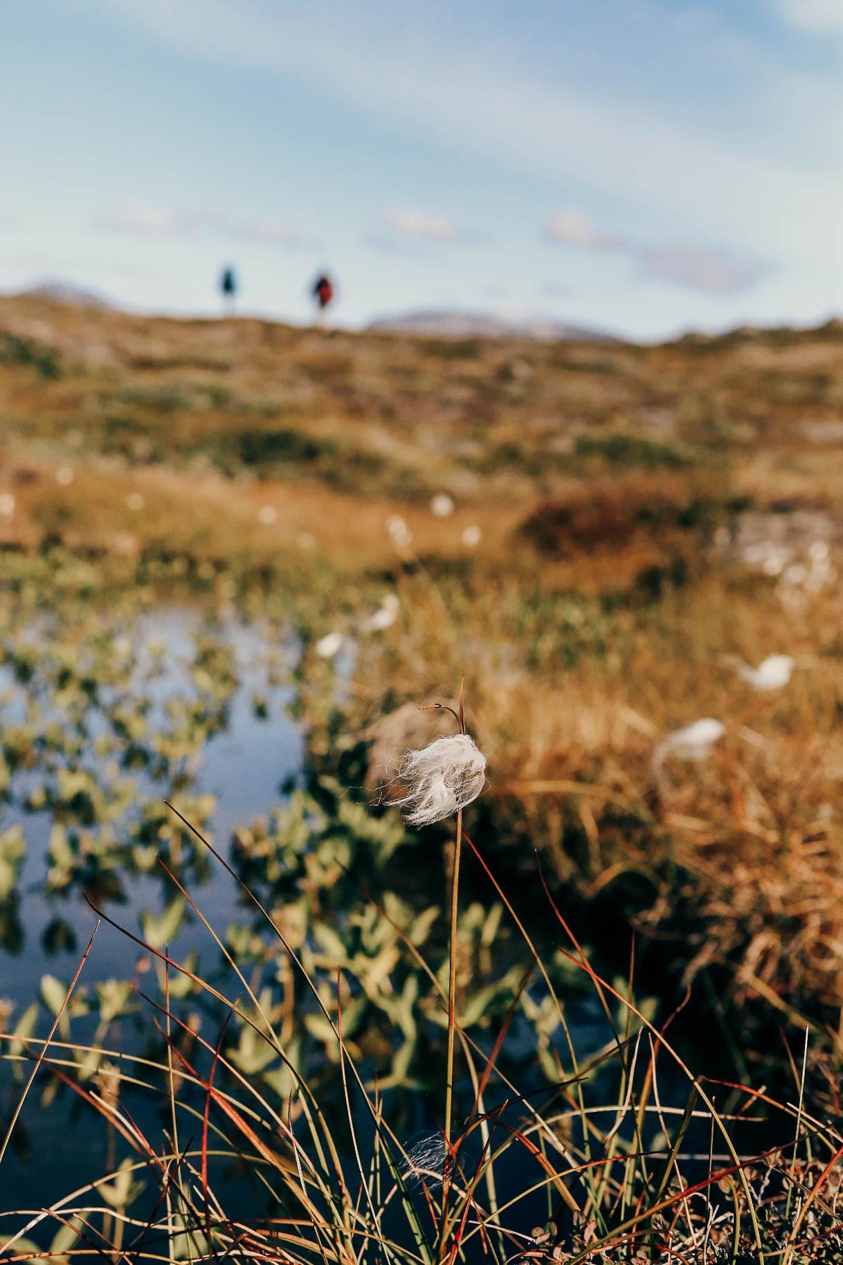 Groenland-Trekking-Hanwag-1890