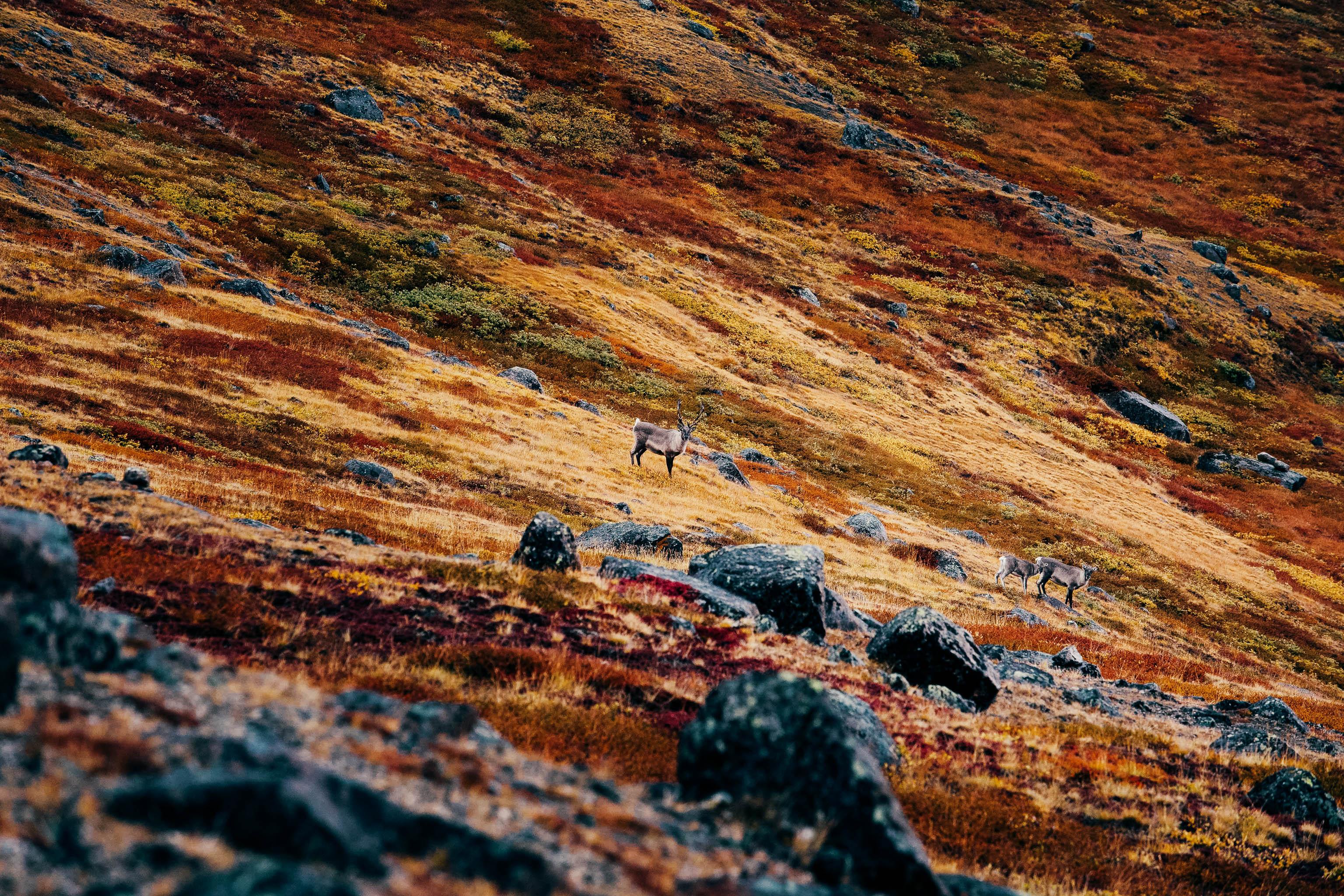 Groenland-Trekking-Hanwag-3146