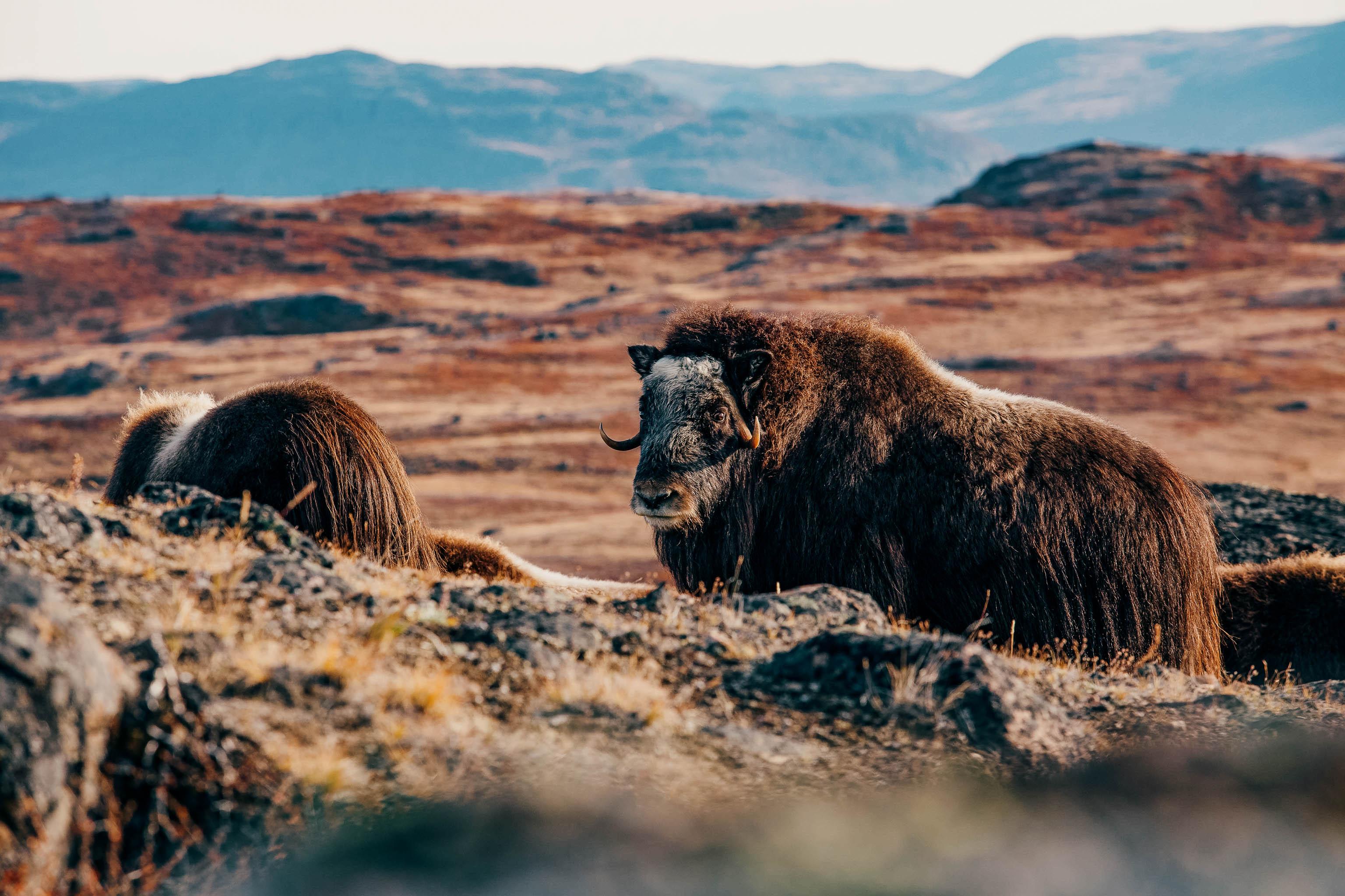 Groenland-Trekking-Hanwag-4197