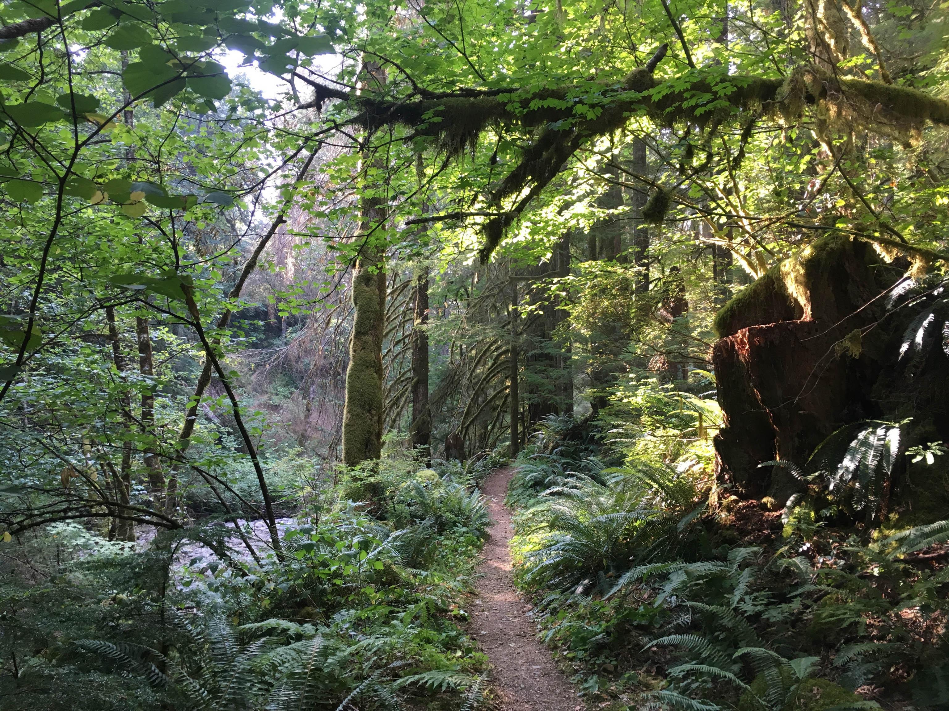 Wie im Regenwald