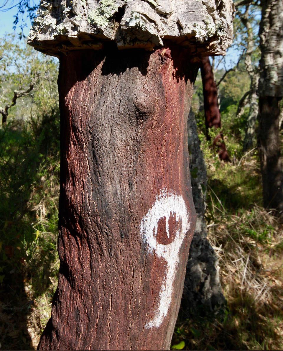 Korkeiche Portugal FischerwegCork trees Hiking algarve Fishermen's trail