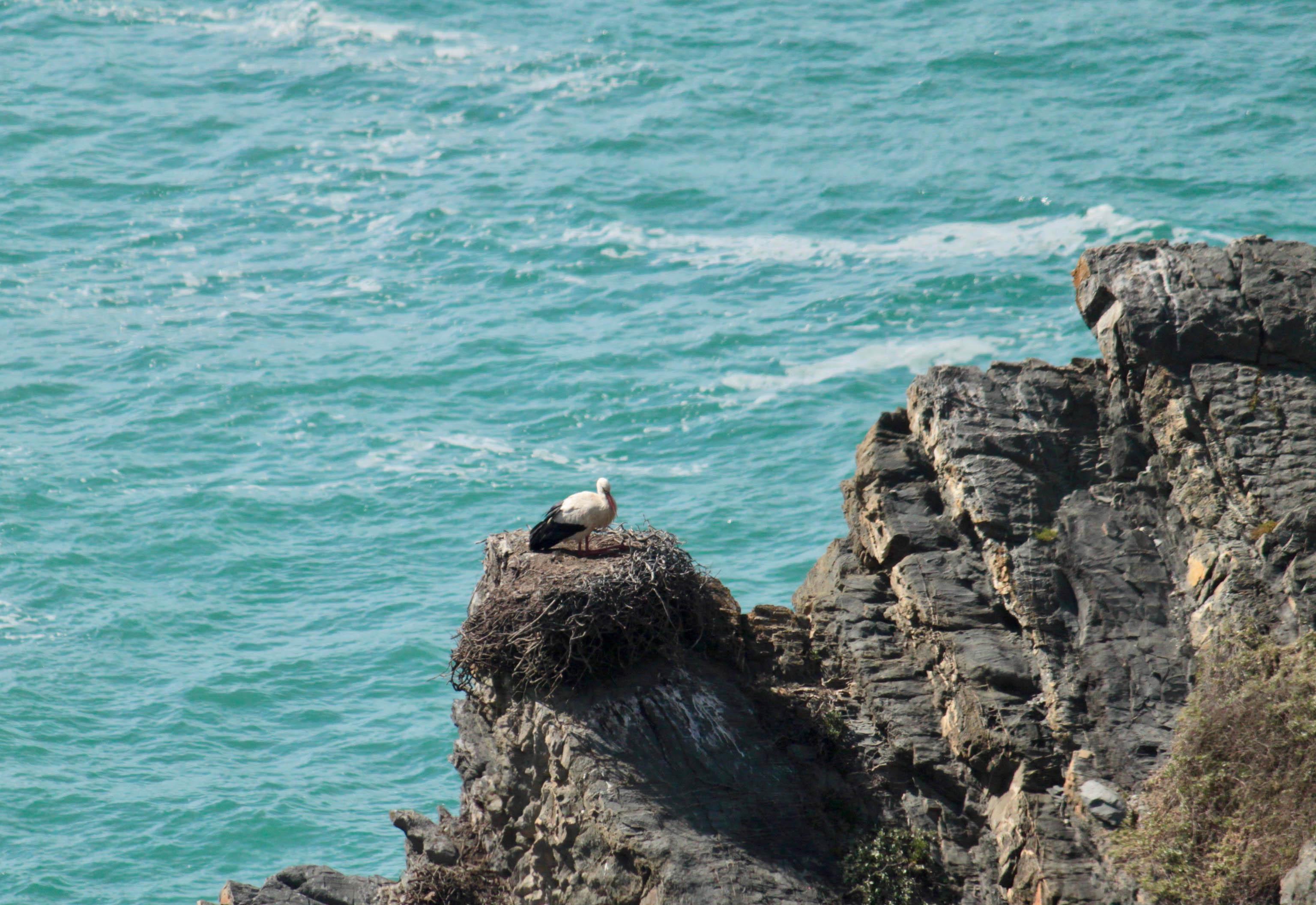 Stork Fisherman's Trail Portugal