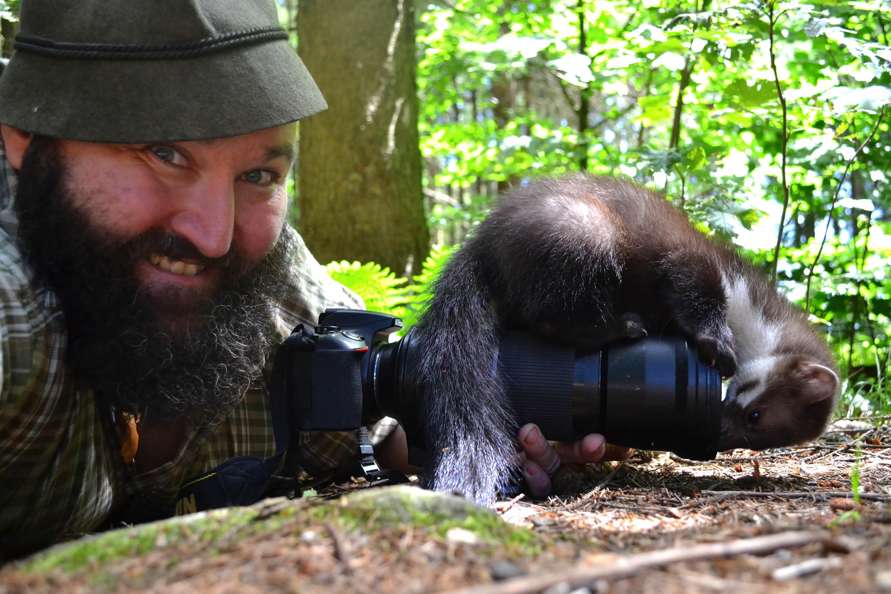 Wildlife spotting Woid Woife stone marten